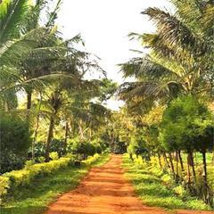 Prakritik Coffee Estate & Home Stay in Sakleshpur