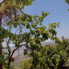 Rainforest Restaurant & Villas in Panchgani