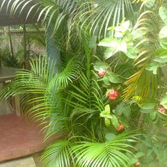 Rangamati Garden Resort in Shantiniketan