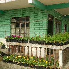 Shashi Homestay in Darjeeling