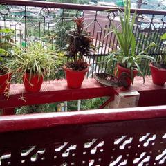 Hotel Shree Hari Hotel in Mukteshwar Nainital