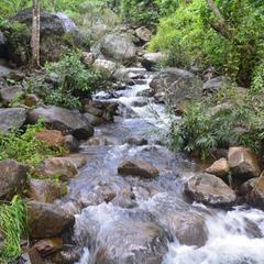 Stream Garden Mountain Resort in Wayanad