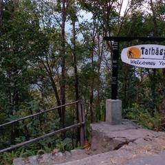 Tathagata Farm in Darjeeling