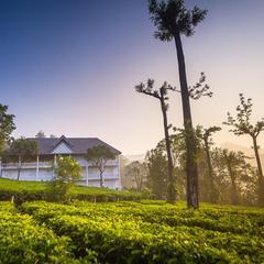 Tea Harvester in Munnar