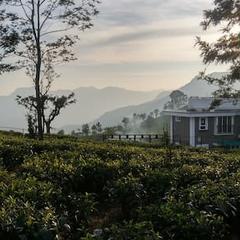 The Umber Tea in Kotagiri