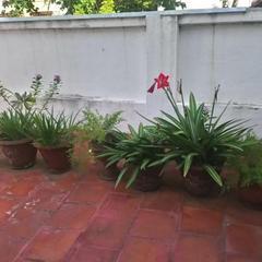 The White Stay in Pondicherry