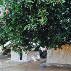 Tutti Hampi Tents & Cafe in Gangawati
