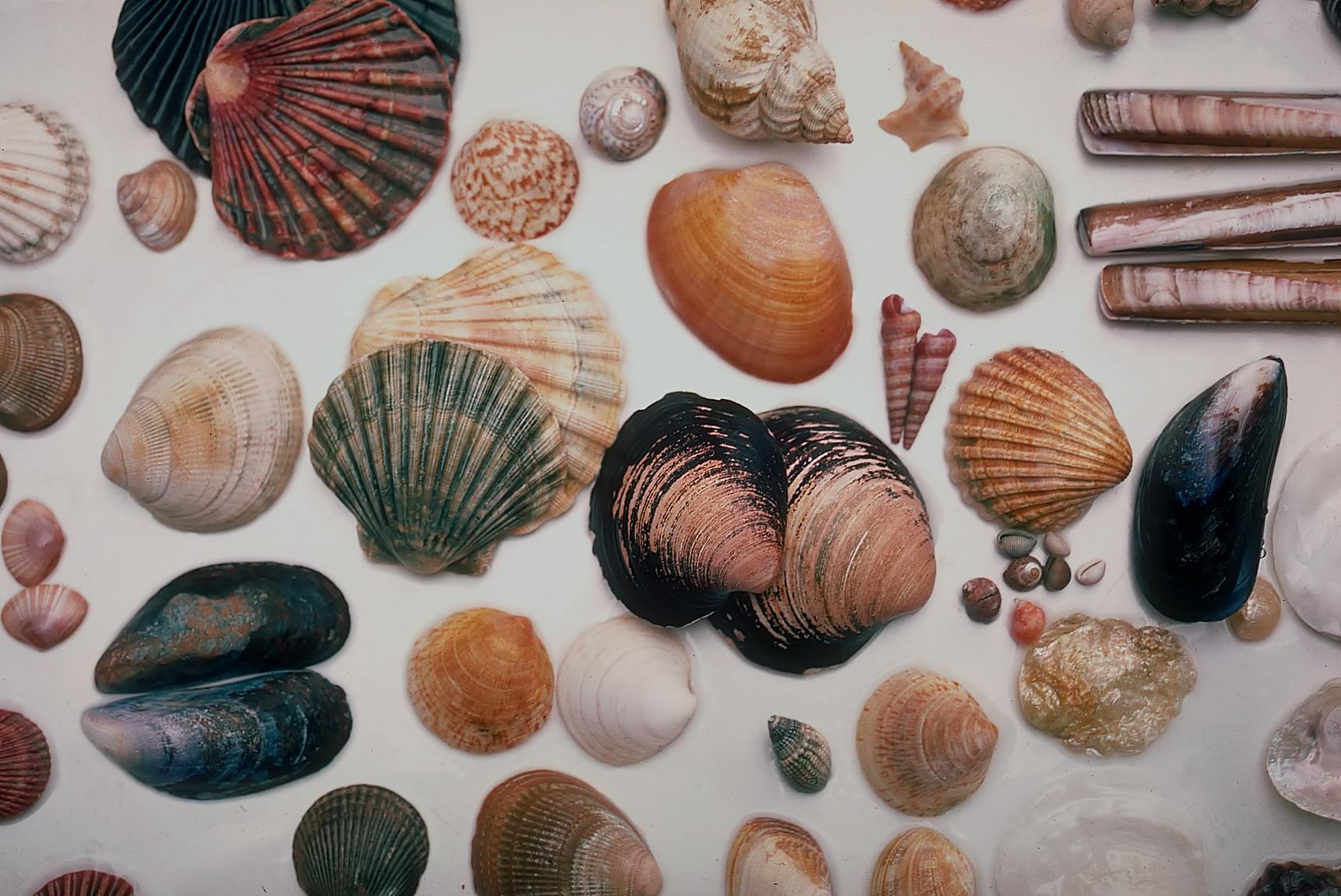 Alice Garg National Seashell Museum