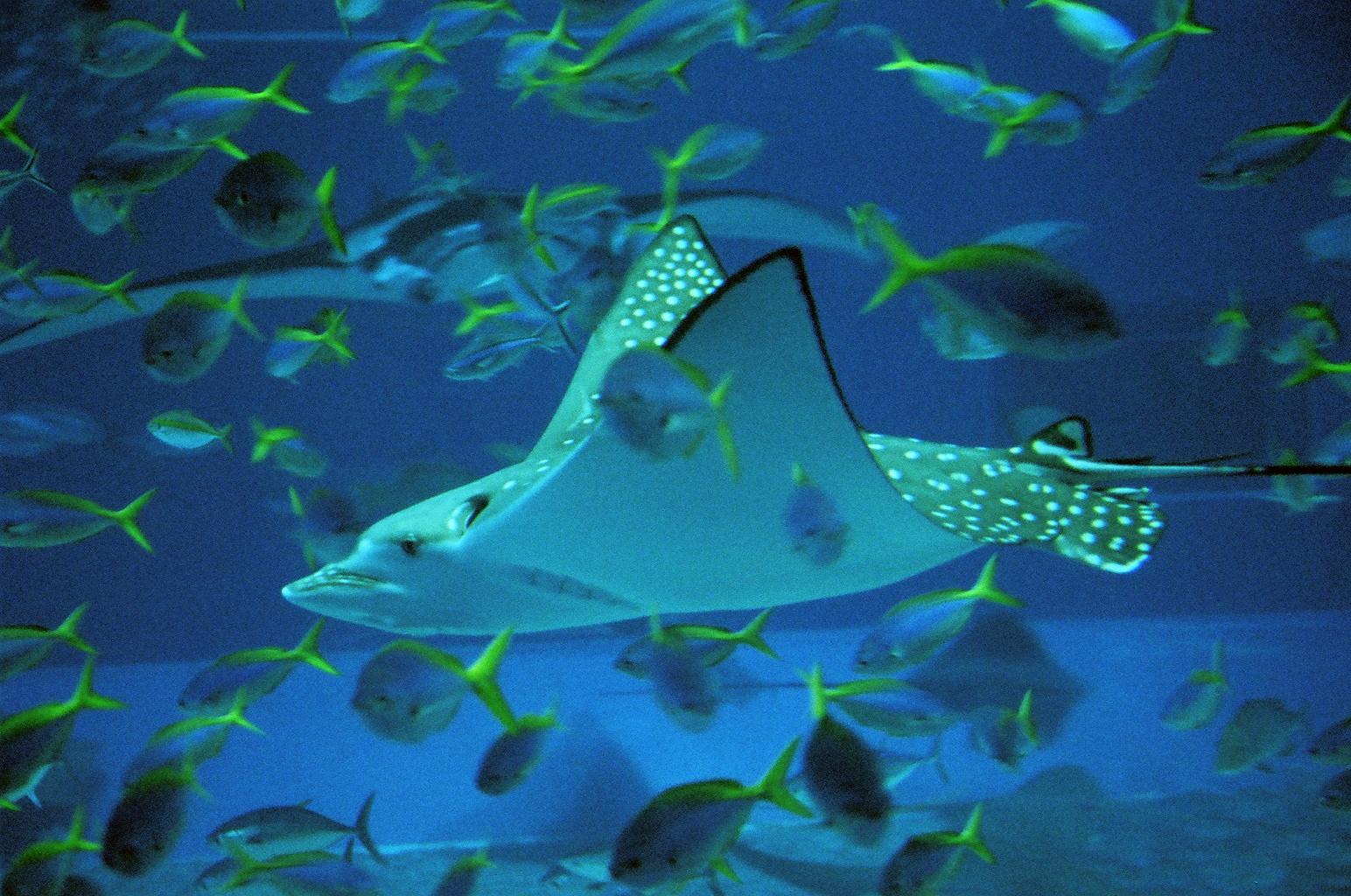 Bangkok Aquarium