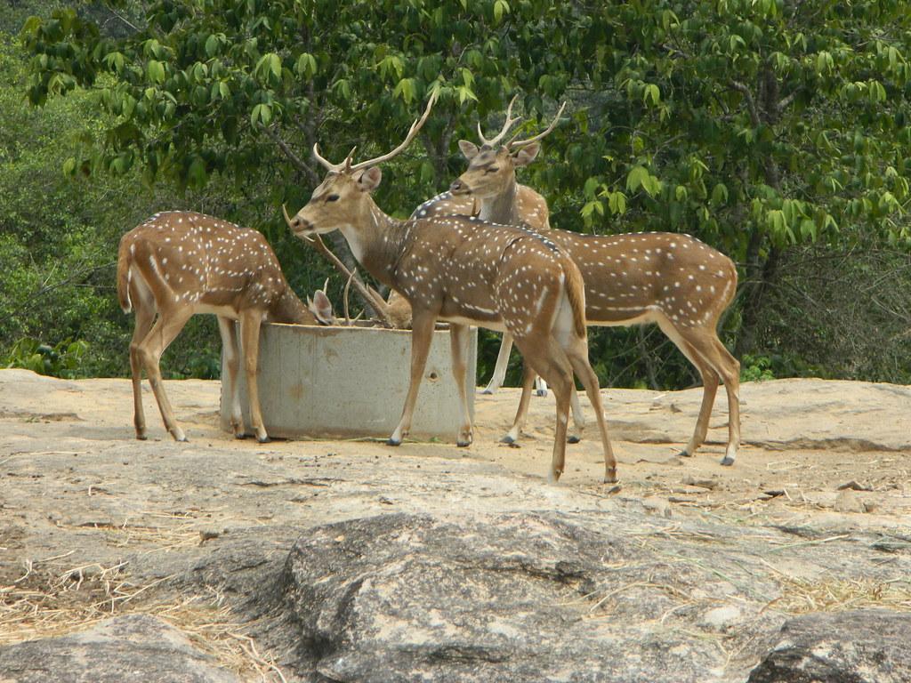 Bannerghatta Safari