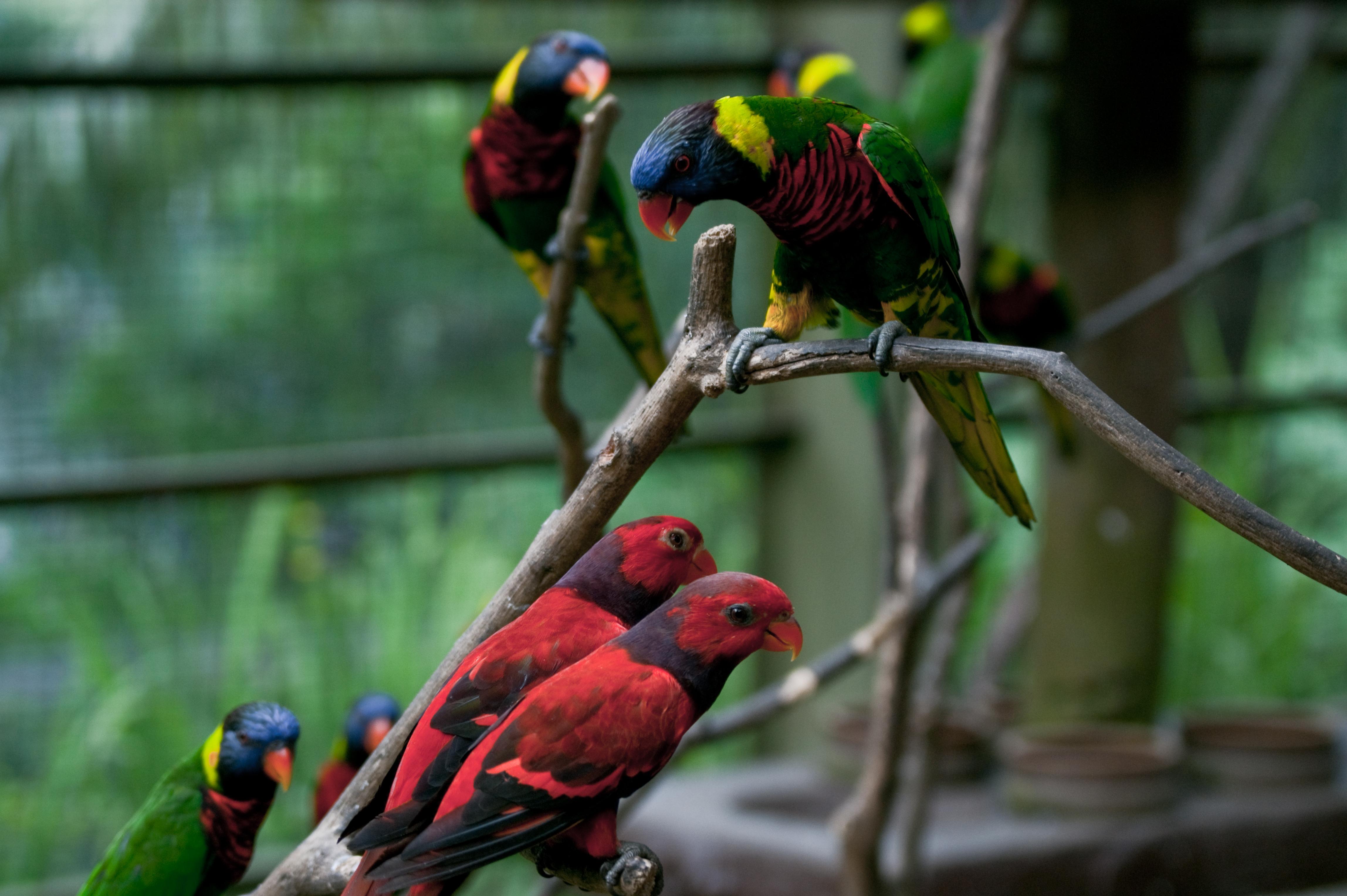 Bird Watching at Kuala Lumpur Bird Park