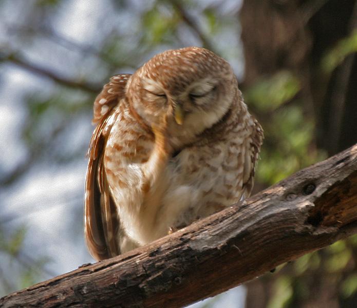 Birdwatching at Keoladeo National Park