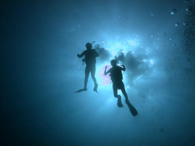 Blue Paradise Diving - Day Tours