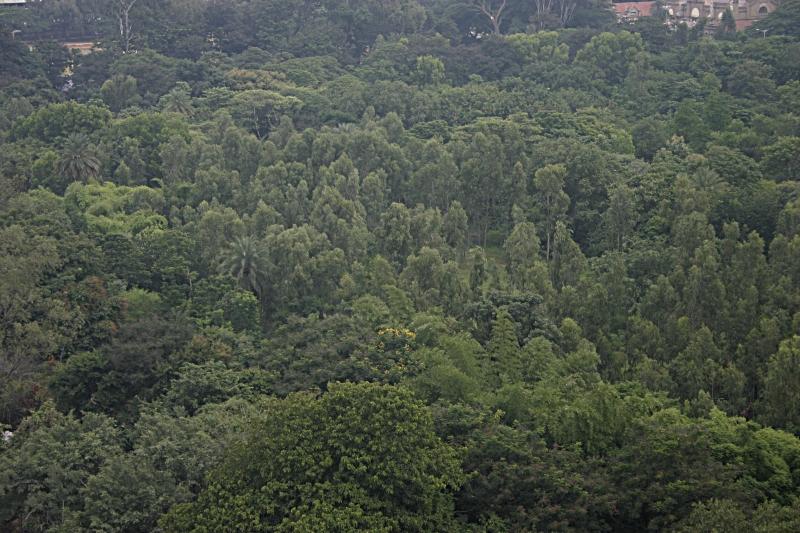 Carriappa Memorial Park