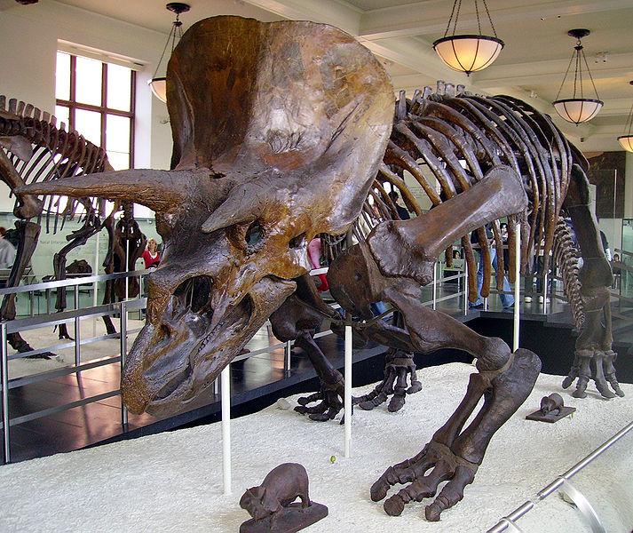 Dinosaurs: Dawn to Extinction