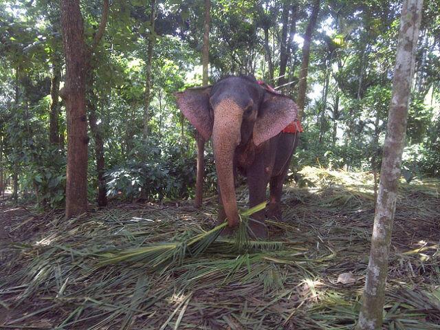 Elephant Arrival Spot