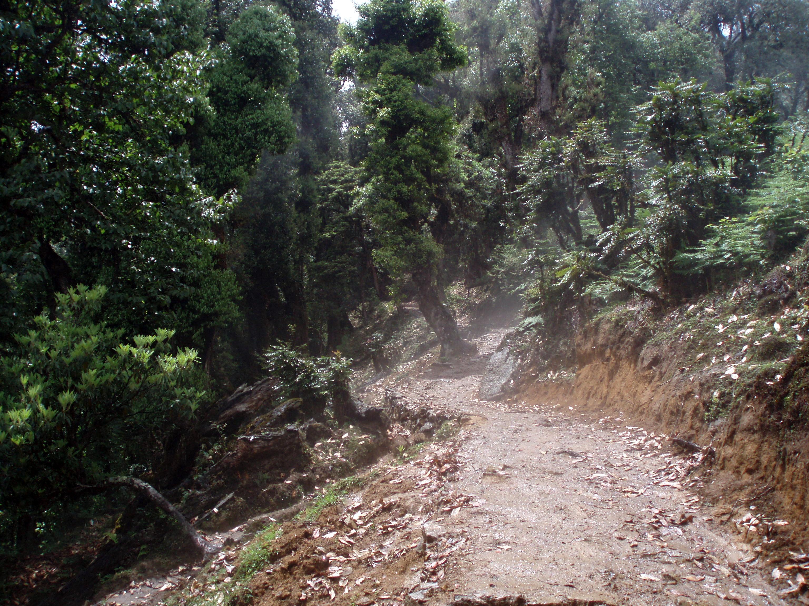 Gurudongma Tours & Treks