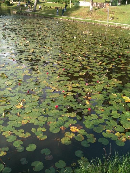 Jarain Pitcher Plant Lake