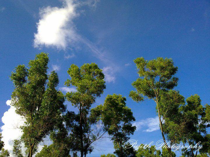 Jarkabandi State Forest