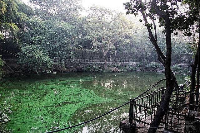 Kamala Nehru Ridge Park
