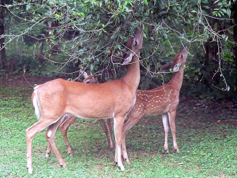 Kanakeshwar Forest