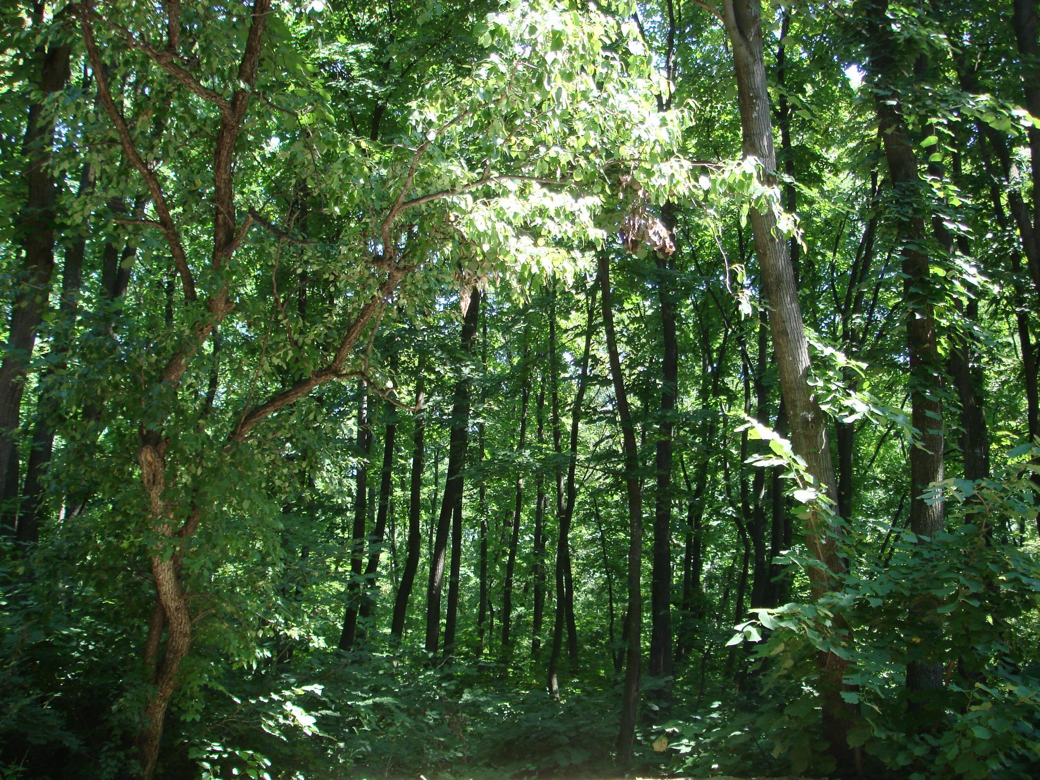 Kikar Jungle Area