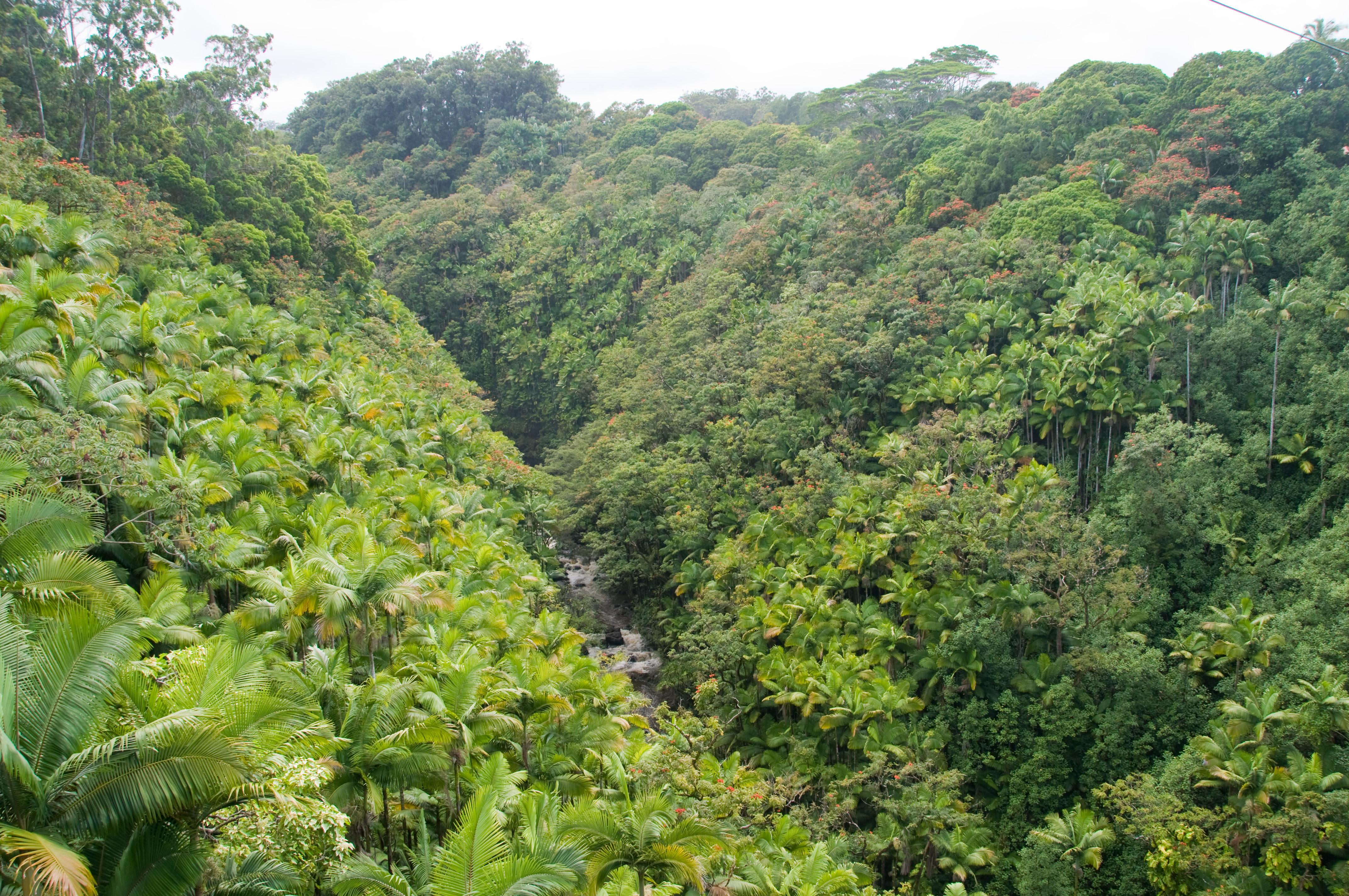 Kodia Jungle