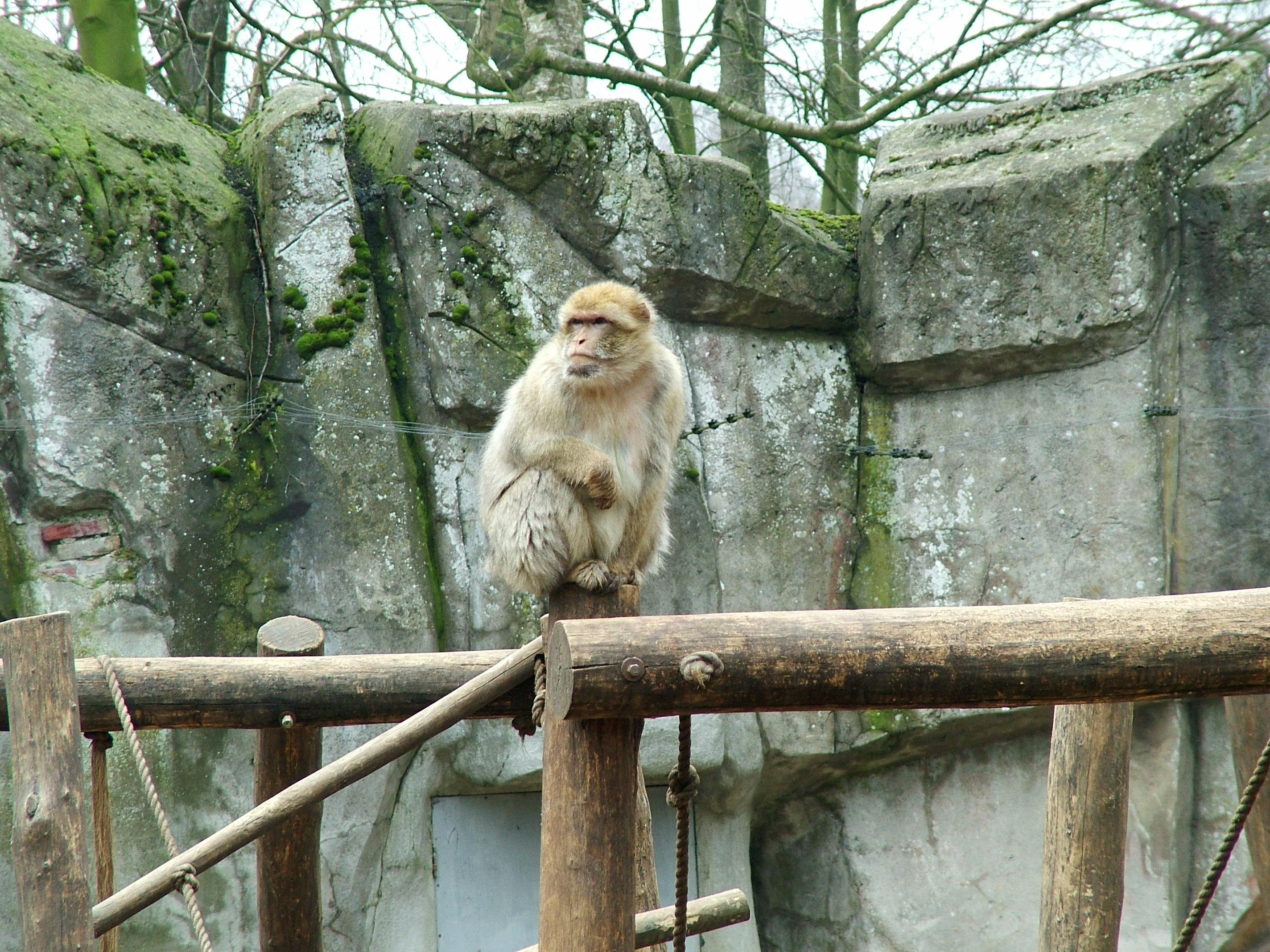 Kohima Zoo
