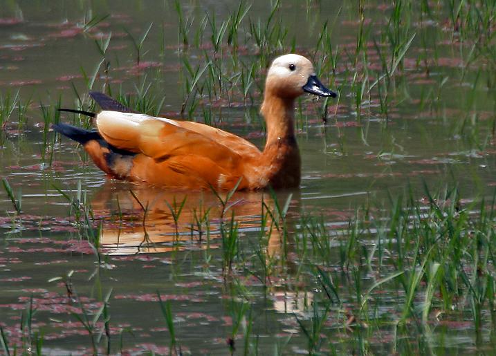 Manas Lake Bhugaon