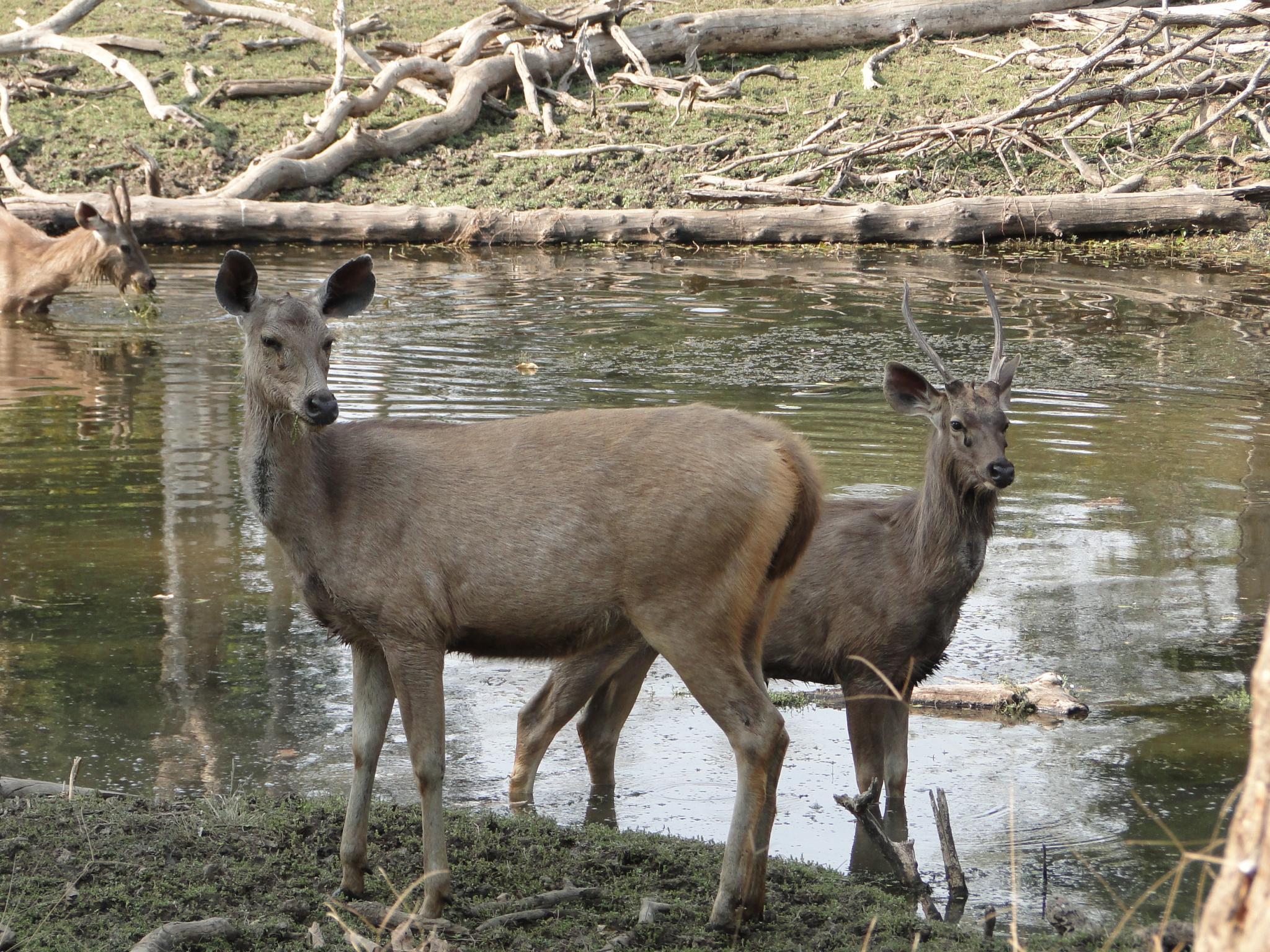 Musk Deer Farm
