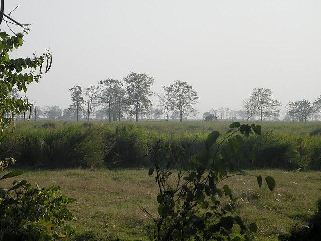 Orang National Park