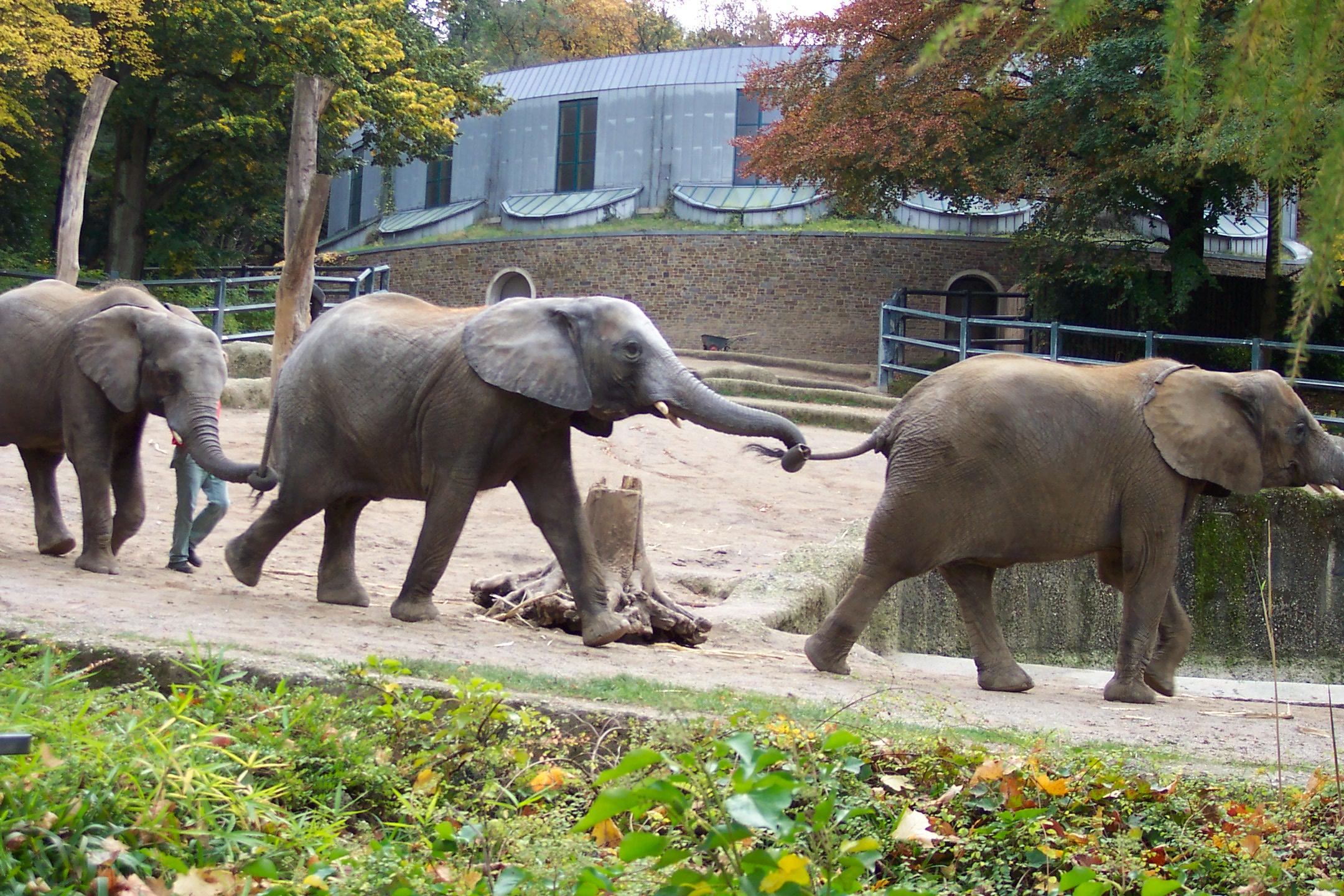 Pipli Zoo