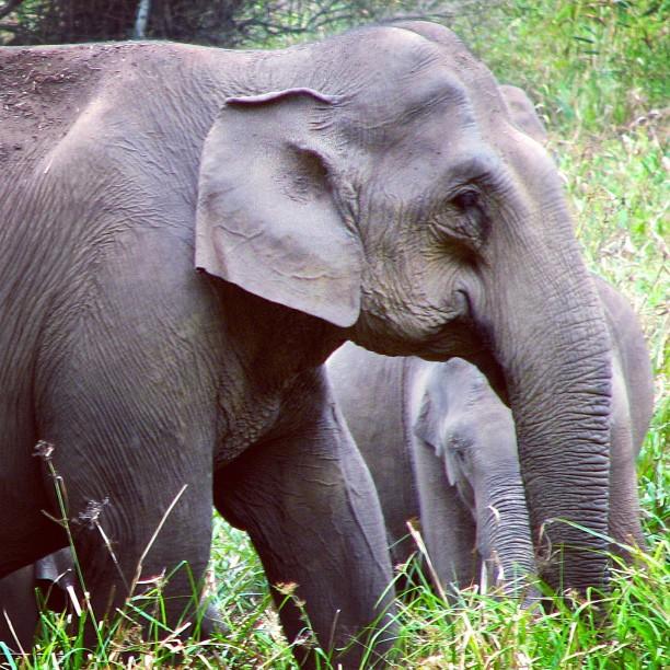 Punnathoor Kotta Elephant Sanctuary