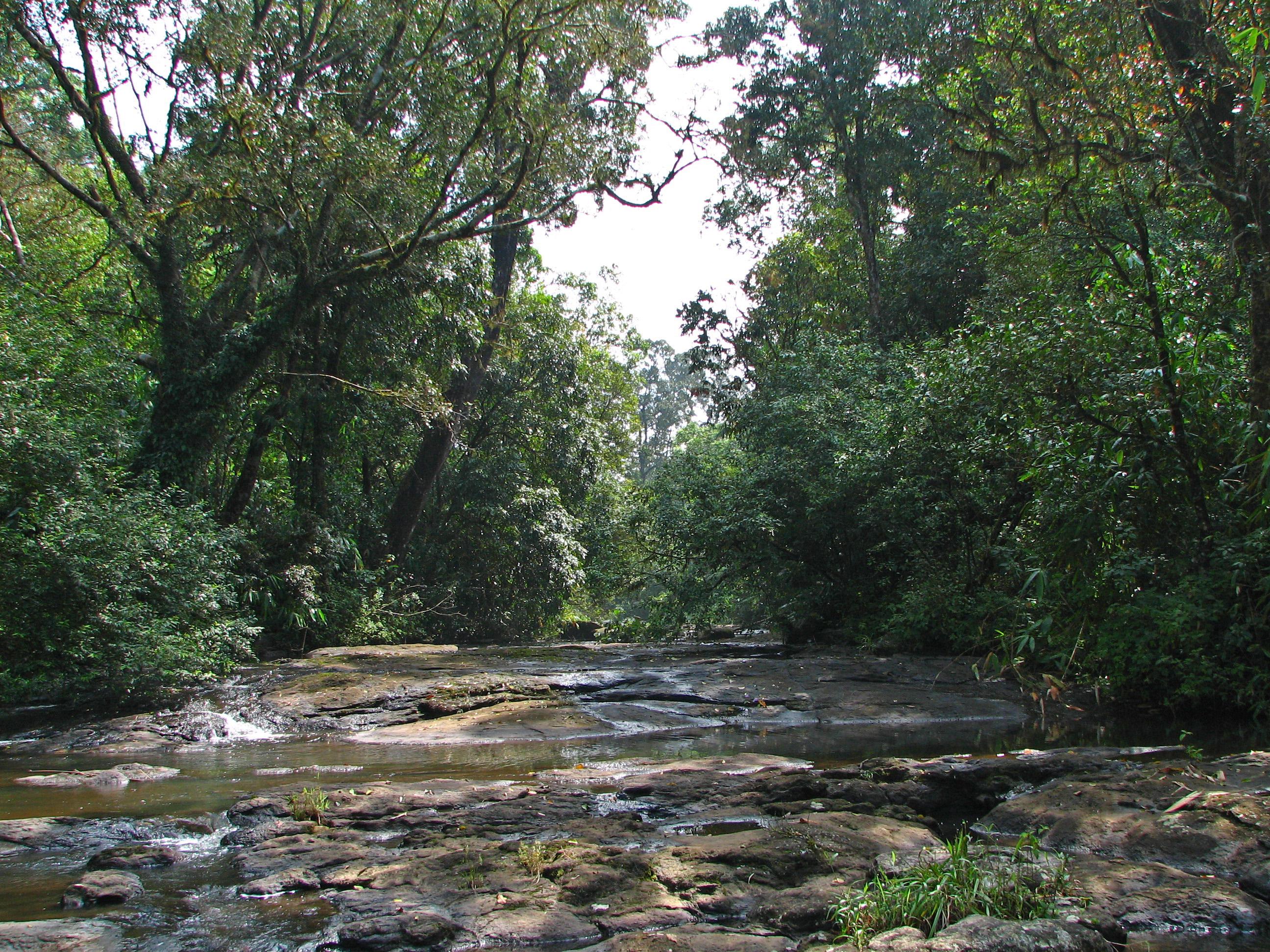 Rikauli Reserve Forest