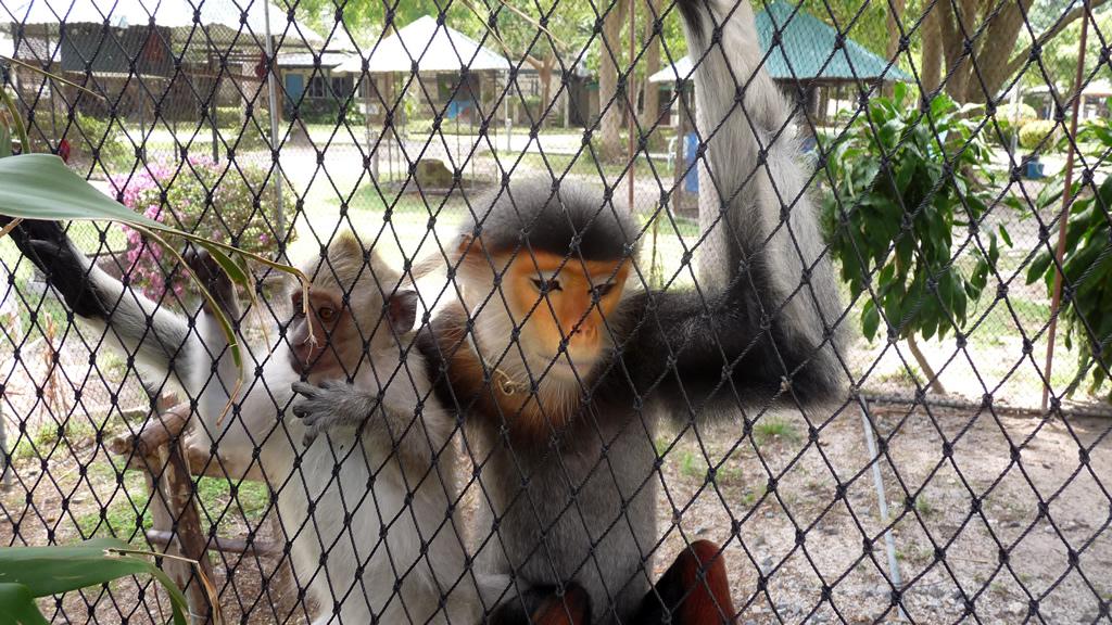 Samui Aquarium and Tiger Zoo