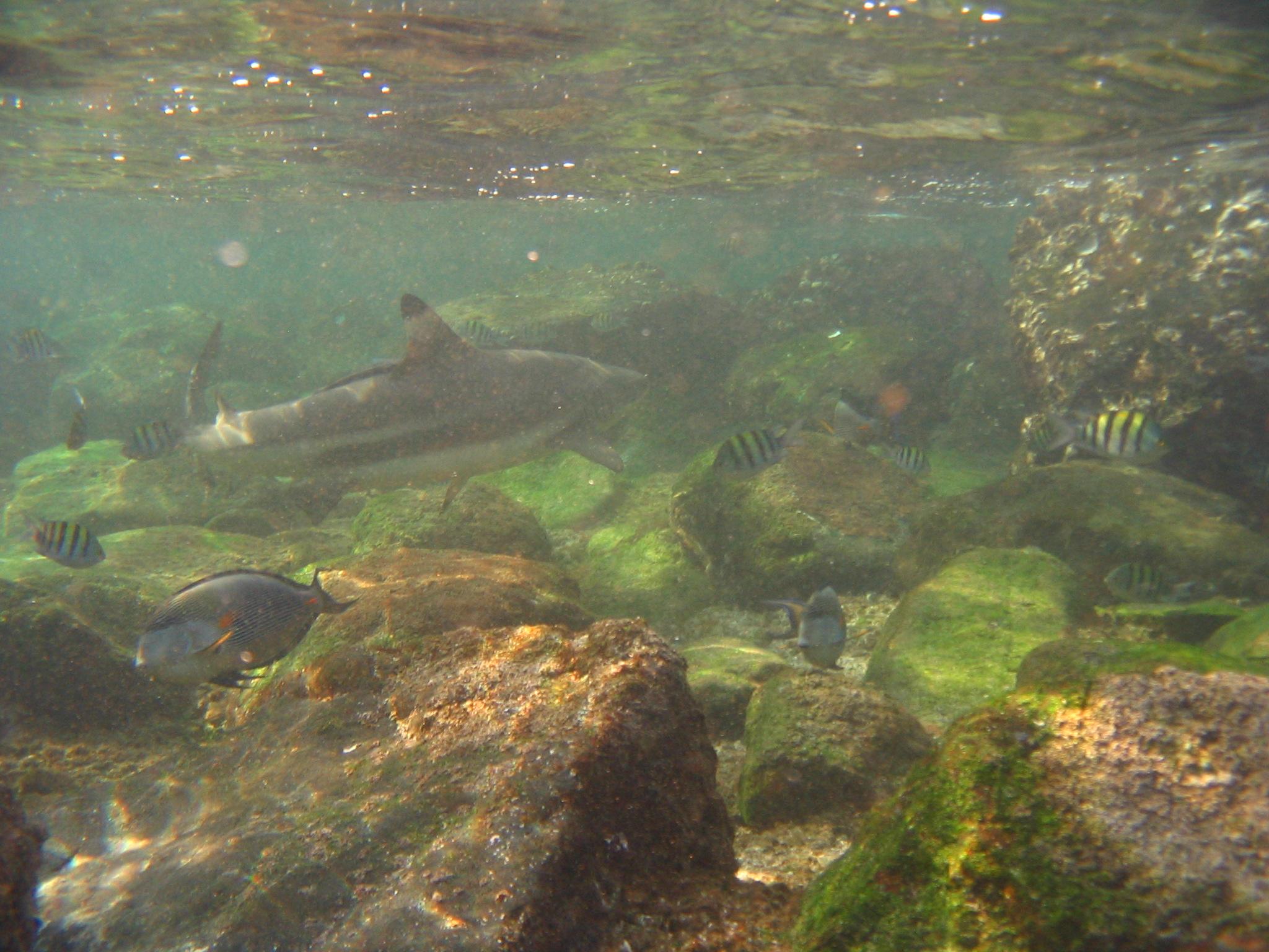 Scuba Diving & Snorkeling in Dubai