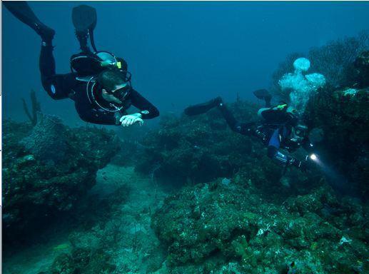 Scuba Diving at Sail Rock