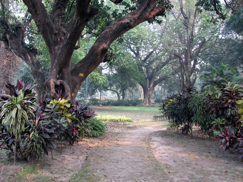 SG Makhana Garden