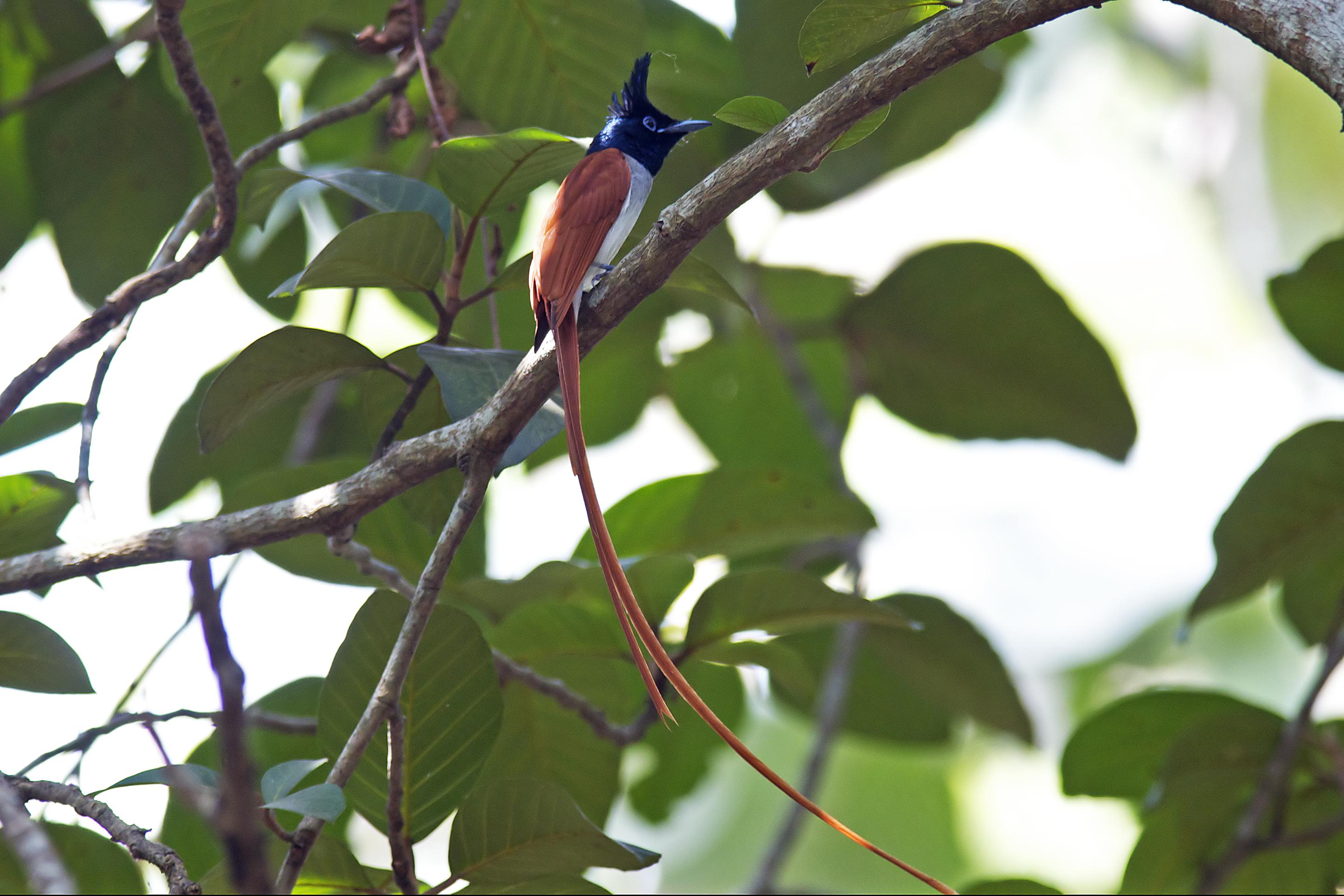 Suchindram Theroor Birds Sanctuary