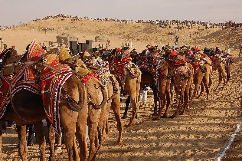 Thar Camel Safari