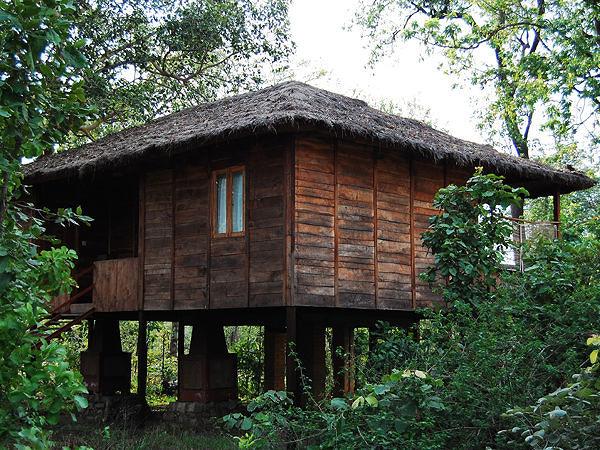 Tiger N Woods Resort