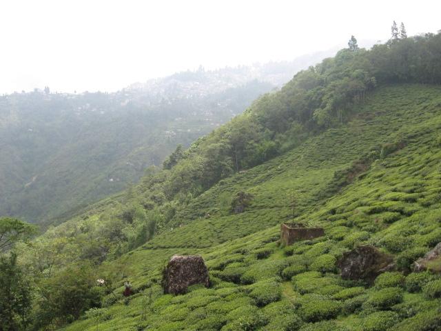 Tumsong Tea Estate