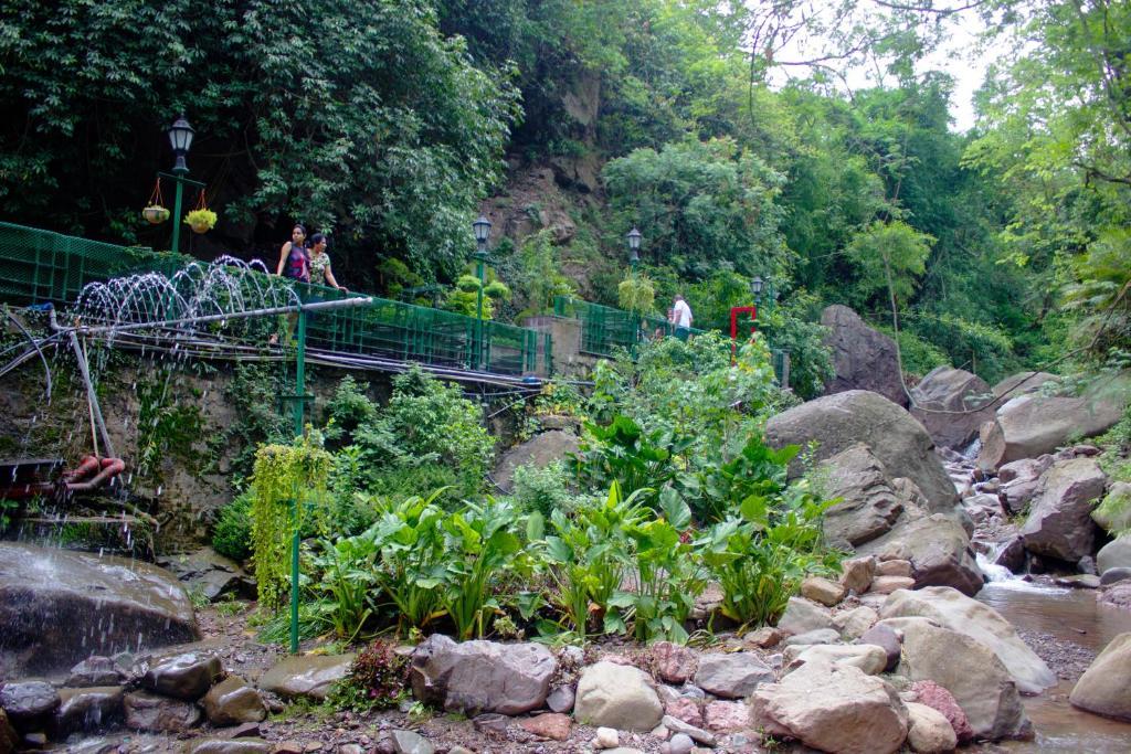 Savoy Greens in Kasauli