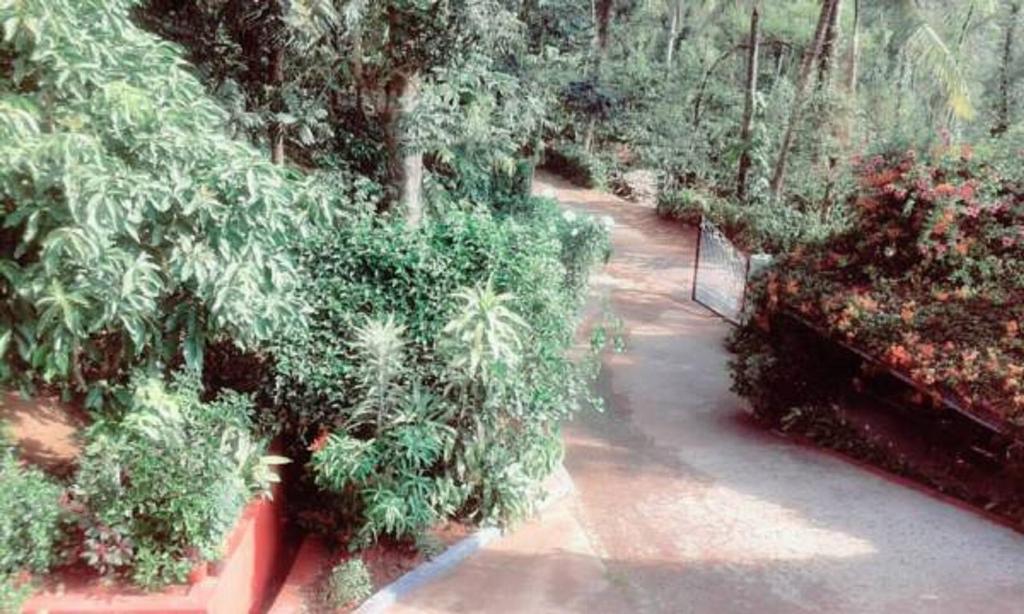 Tripthrill Kavery Estate Stay in Napoklu