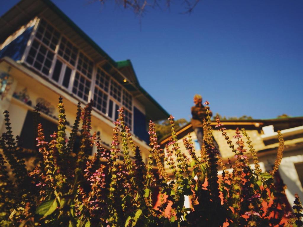 Vista Backpackers Hostel in Patwa Dunga