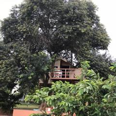 Tree House Close To Bangalore in Hosur