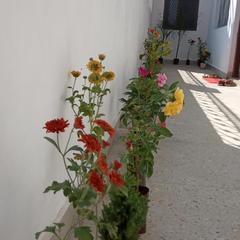 Sunhouse Homestay in Khajuraho