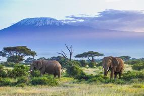 Dar es Salaam to Kilimanjaro flights